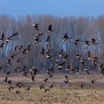 Bird Batching Tour